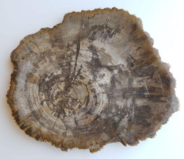 Plate petrified wood 33033