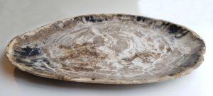 Plate petrified wood 33036