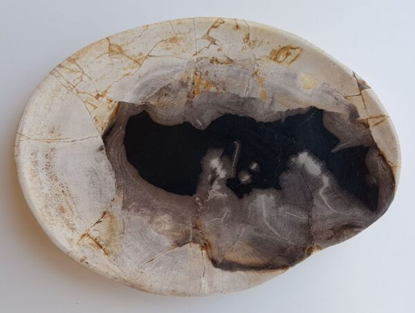 Plate petrified wood 33045c