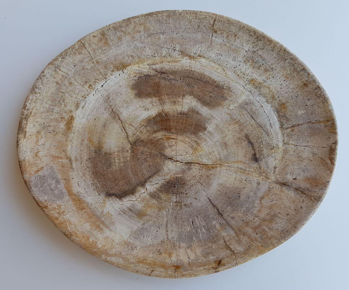 Plate petrified wood 33046c