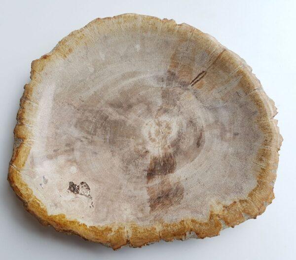 Plate petrified wood 33065