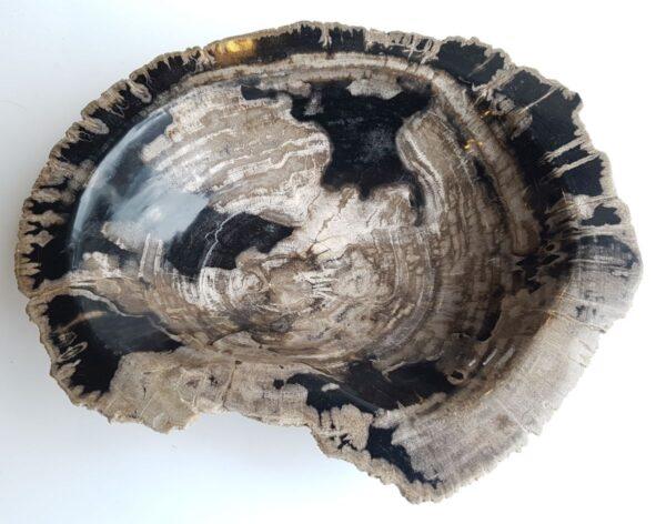 Bowl petrified wood 33320