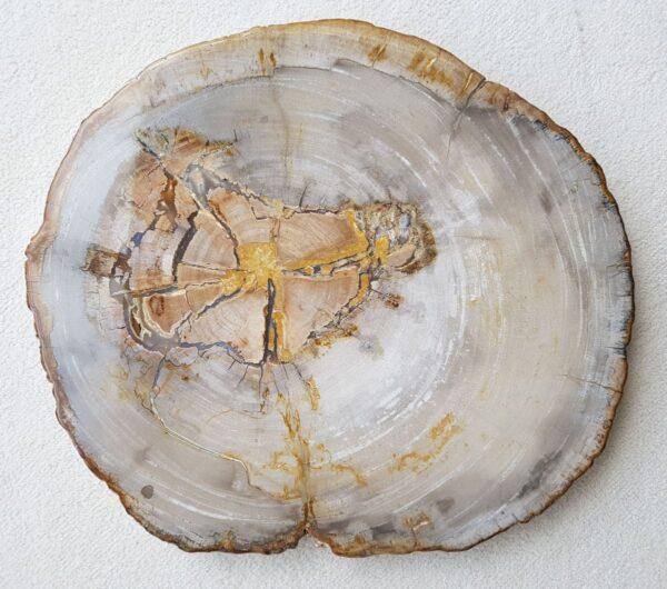 Salontafel versteend hout 31176