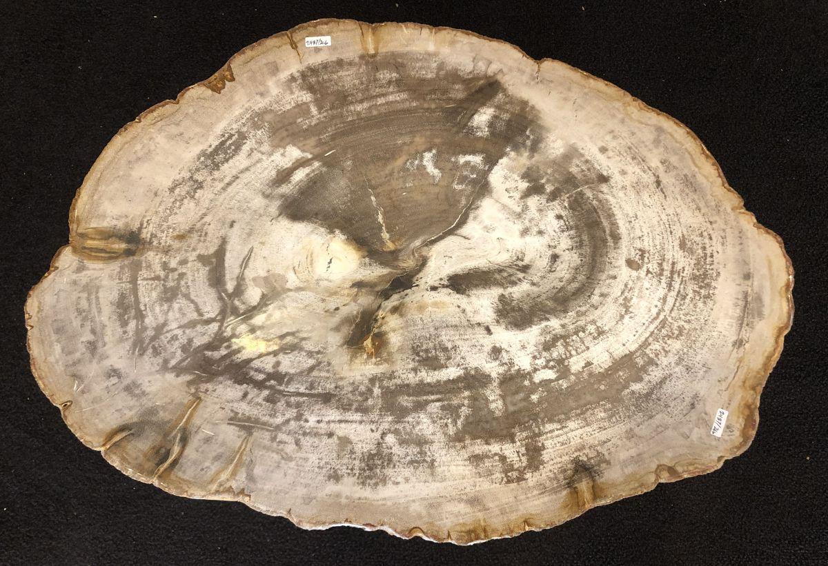Salontafel versteend hout 33144