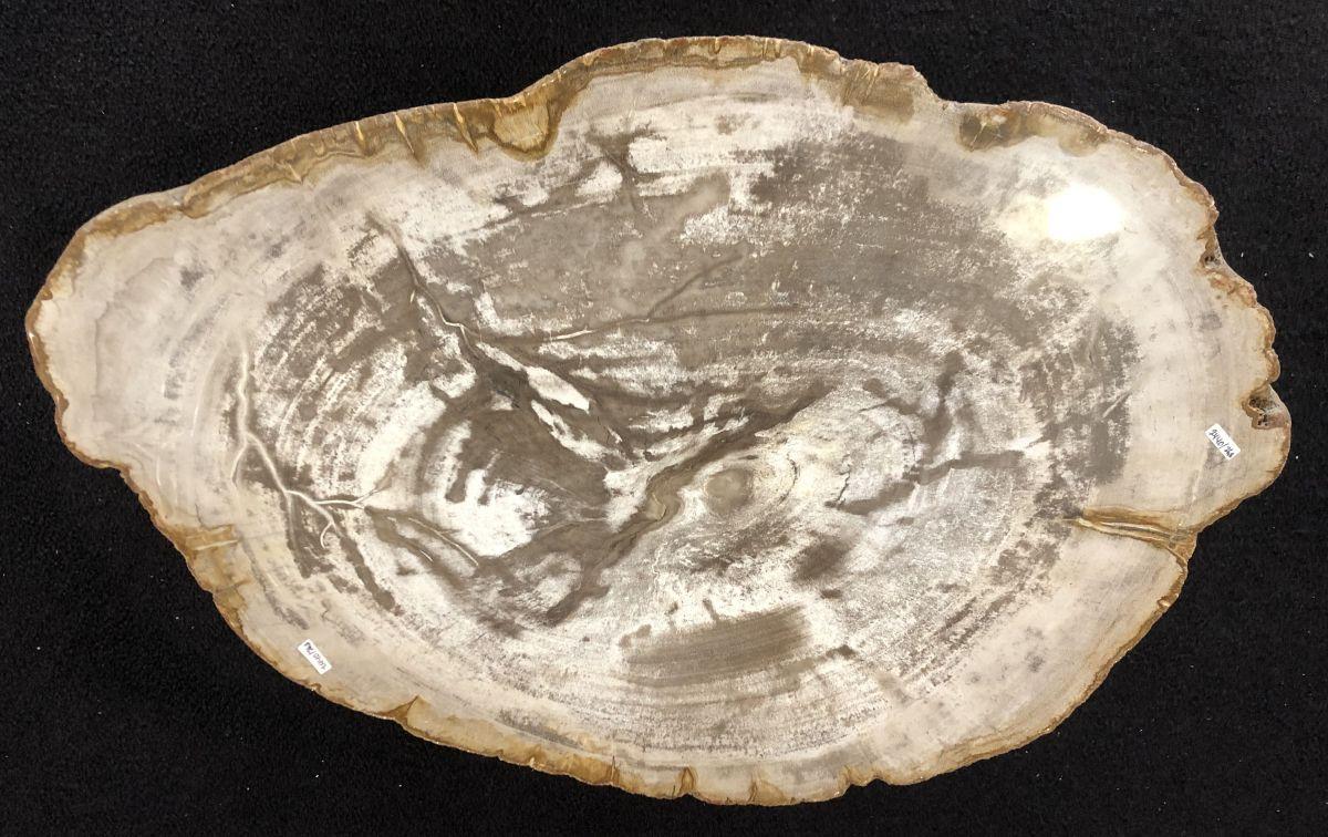 Salontafel versteend hout 33147