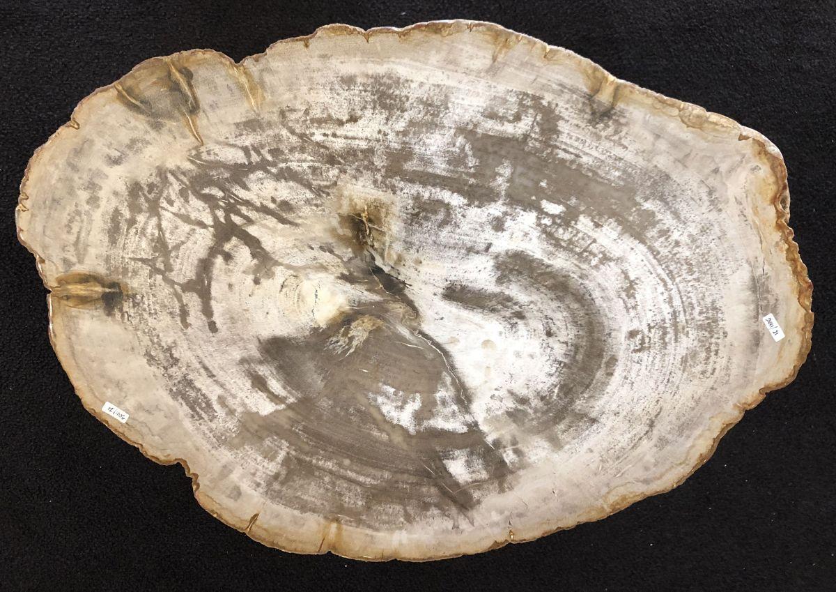 Salontafel versteend hout 33148