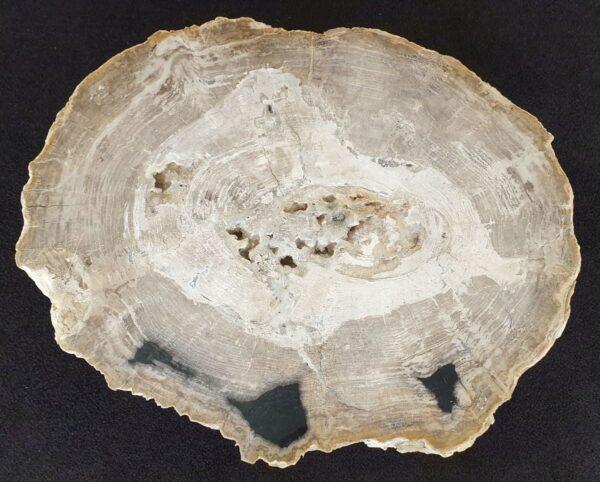 Salontafel versteend hout 33257