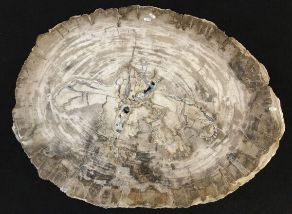 Salontafel versteend hout 33280