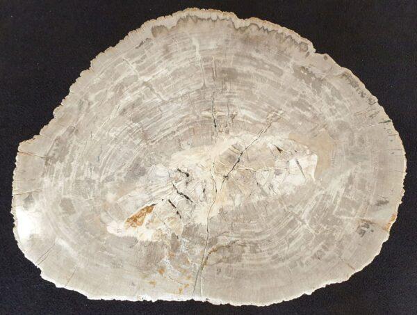 Salontafel versteend hout 33282