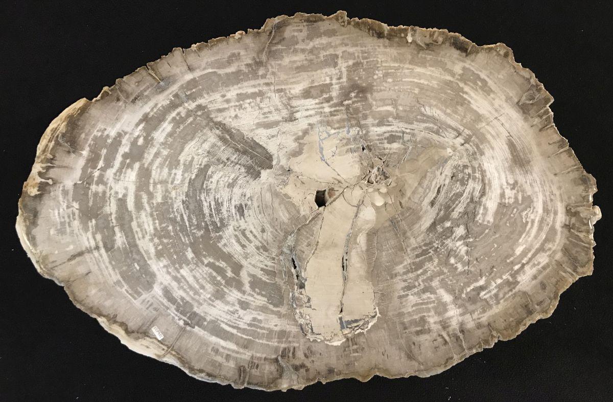 Salontafel versteend hout 33349