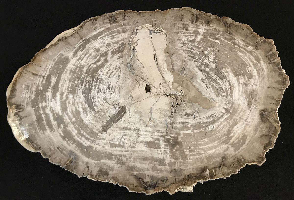 Salontafel versteend hout 33354