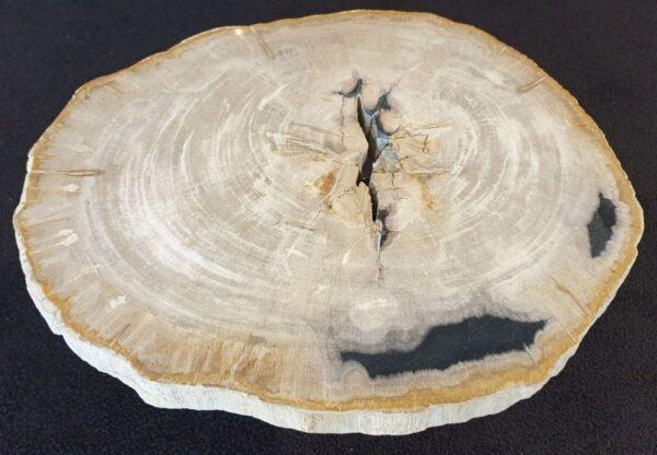 Table basse bois pétrifié 33090