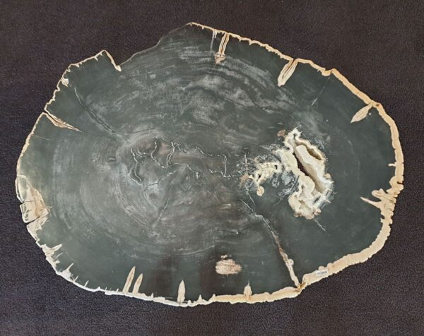 Table basse bois pétrifié 33242