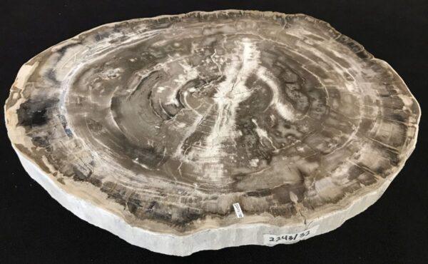 Table basse bois pétrifié 33268