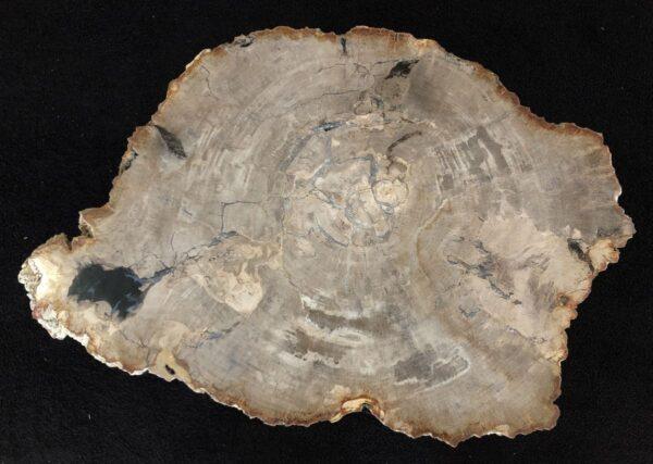 Table basse bois pétrifié 33272