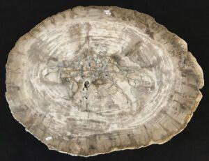 Table basse bois pétrifié 33287