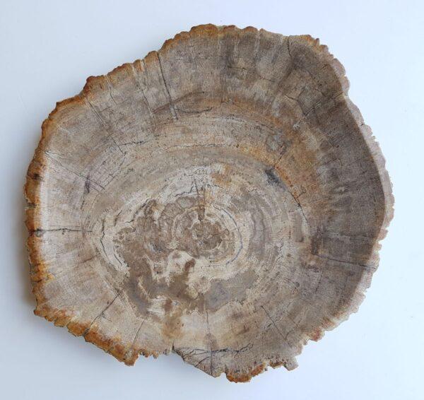 Bord versteend hout 33007b