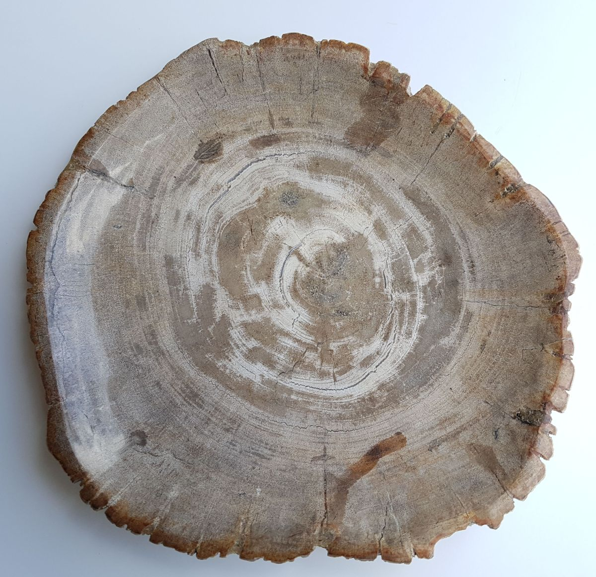 Bord versteend hout 33007k