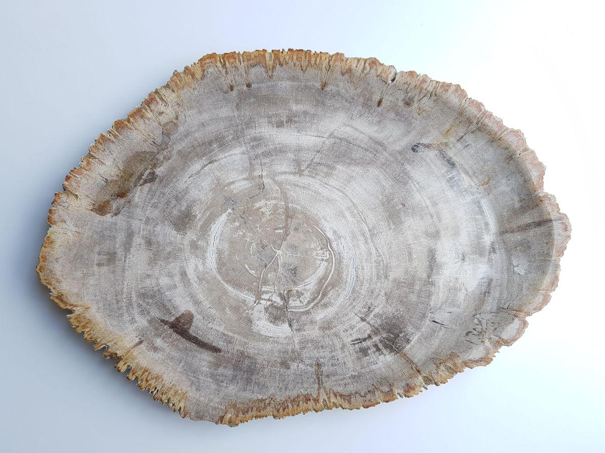 Bord versteend hout 33033b