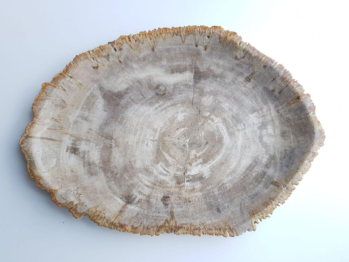 Bord versteend hout 33033i