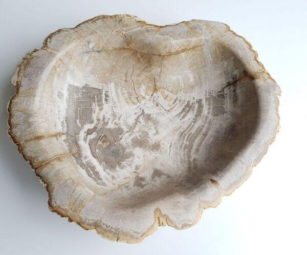 Schaal versteend hout 33068
