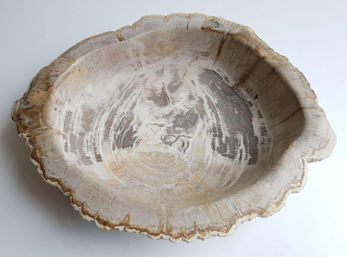 Schaal versteend hout 33306