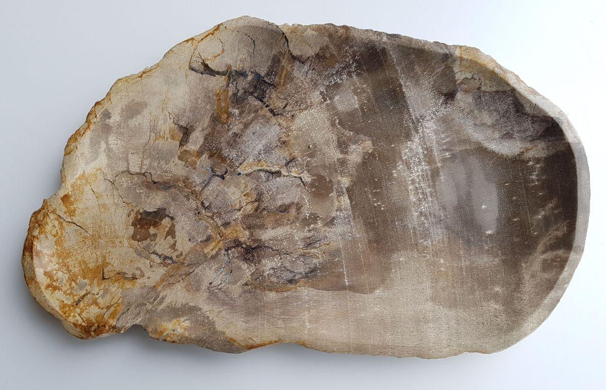 Teller versteinertes Holz 33003d
