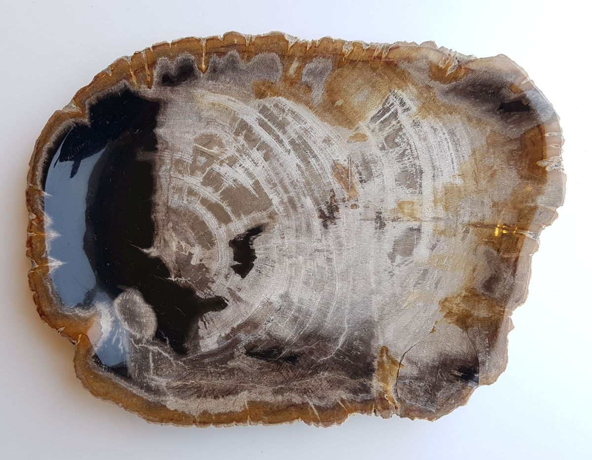 Teller versteinertes Holz 33008b
