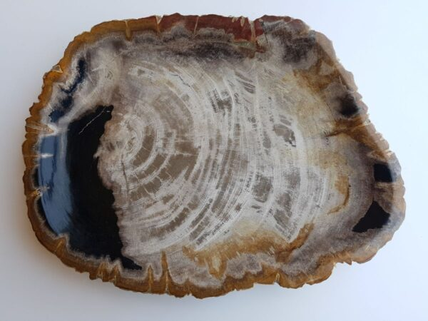 Teller versteinertes Holz 33008c