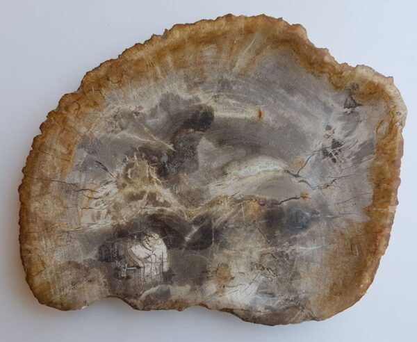 Teller versteinertes Holz 33008i
