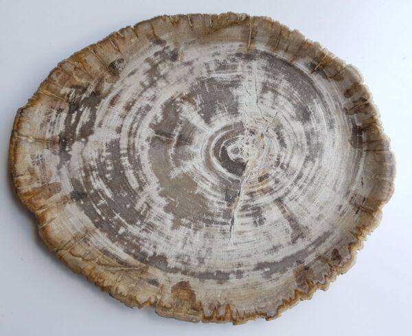 Teller versteinertes Holz 33013a