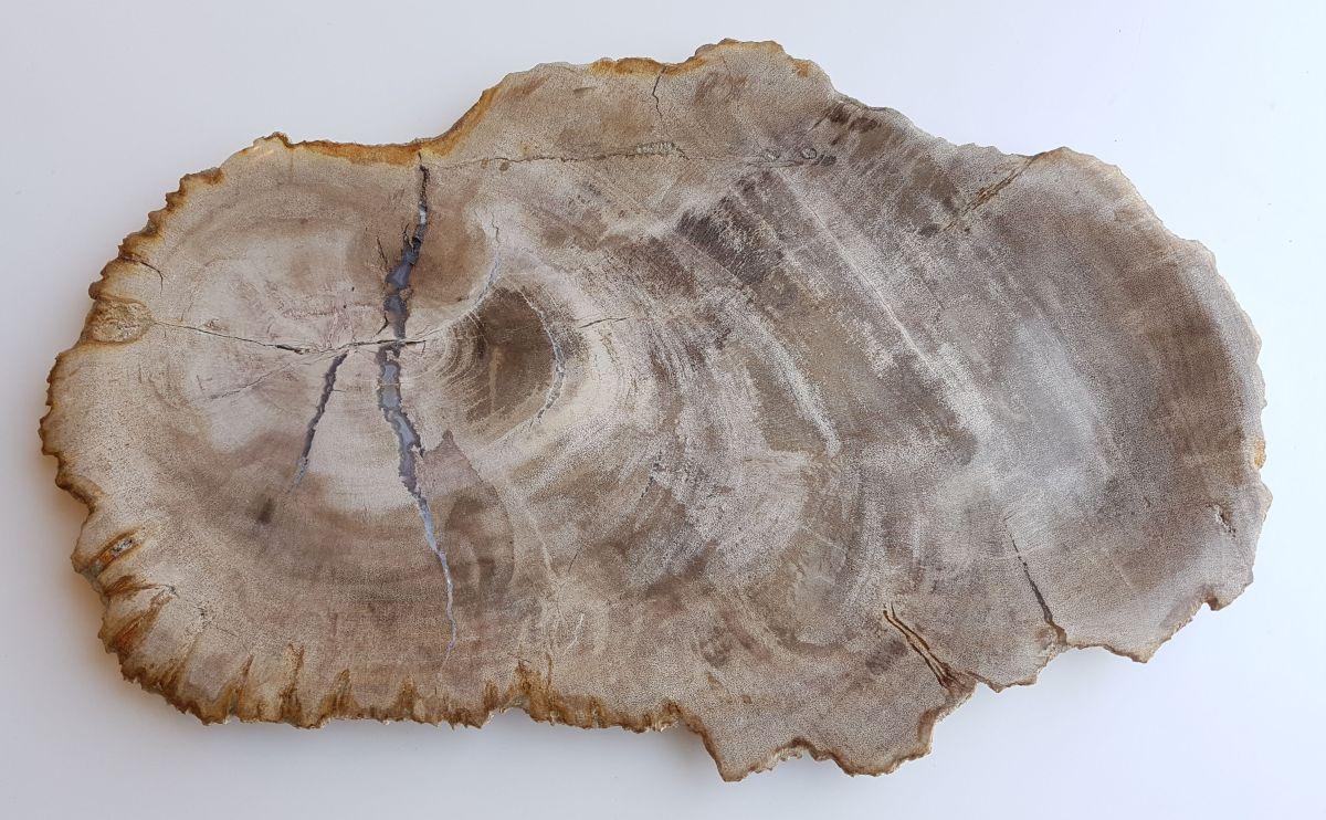 Teller versteinertes Holz 33023a