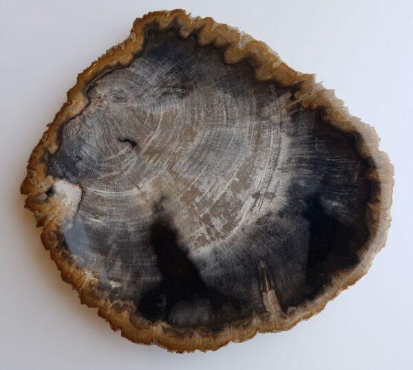 Teller versteinertes Holz 33030a