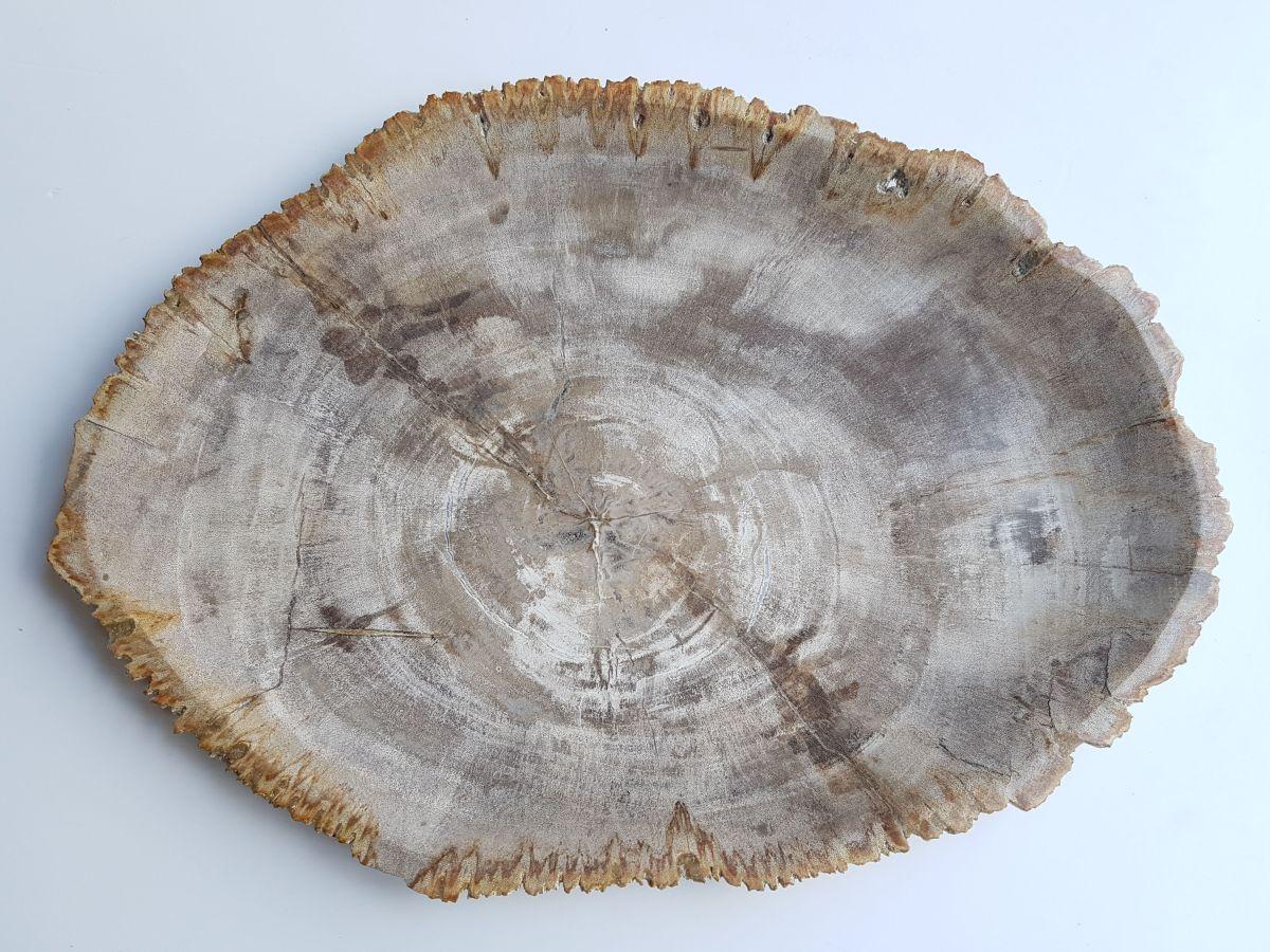 Teller versteinertes Holz 33033g