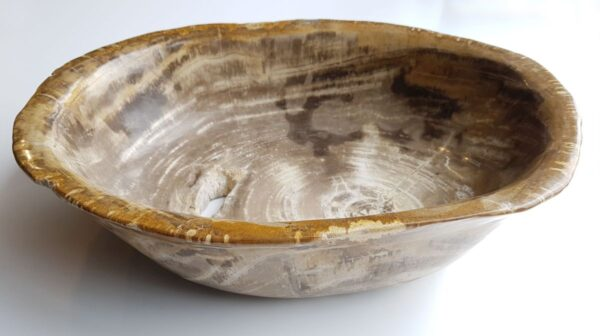 Schale versteinertes Holz 33035