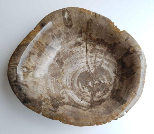 Schale versteinertes Holz 33041