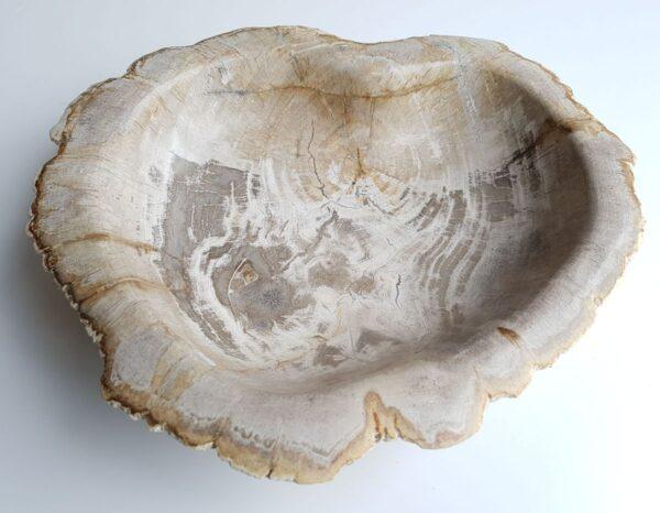 Schale versteinertes Holz 33068