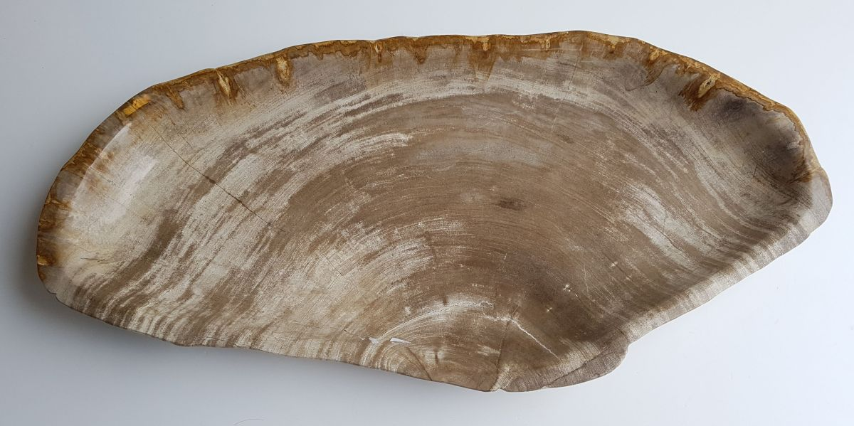 Schale versteinertes Holz 33309