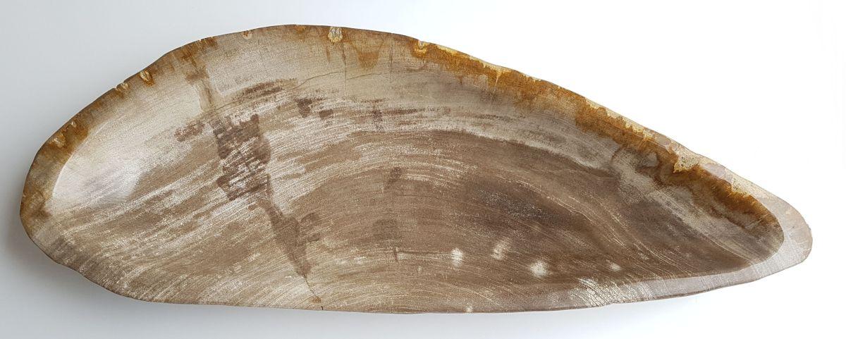 Schale versteinertes Holz 33313