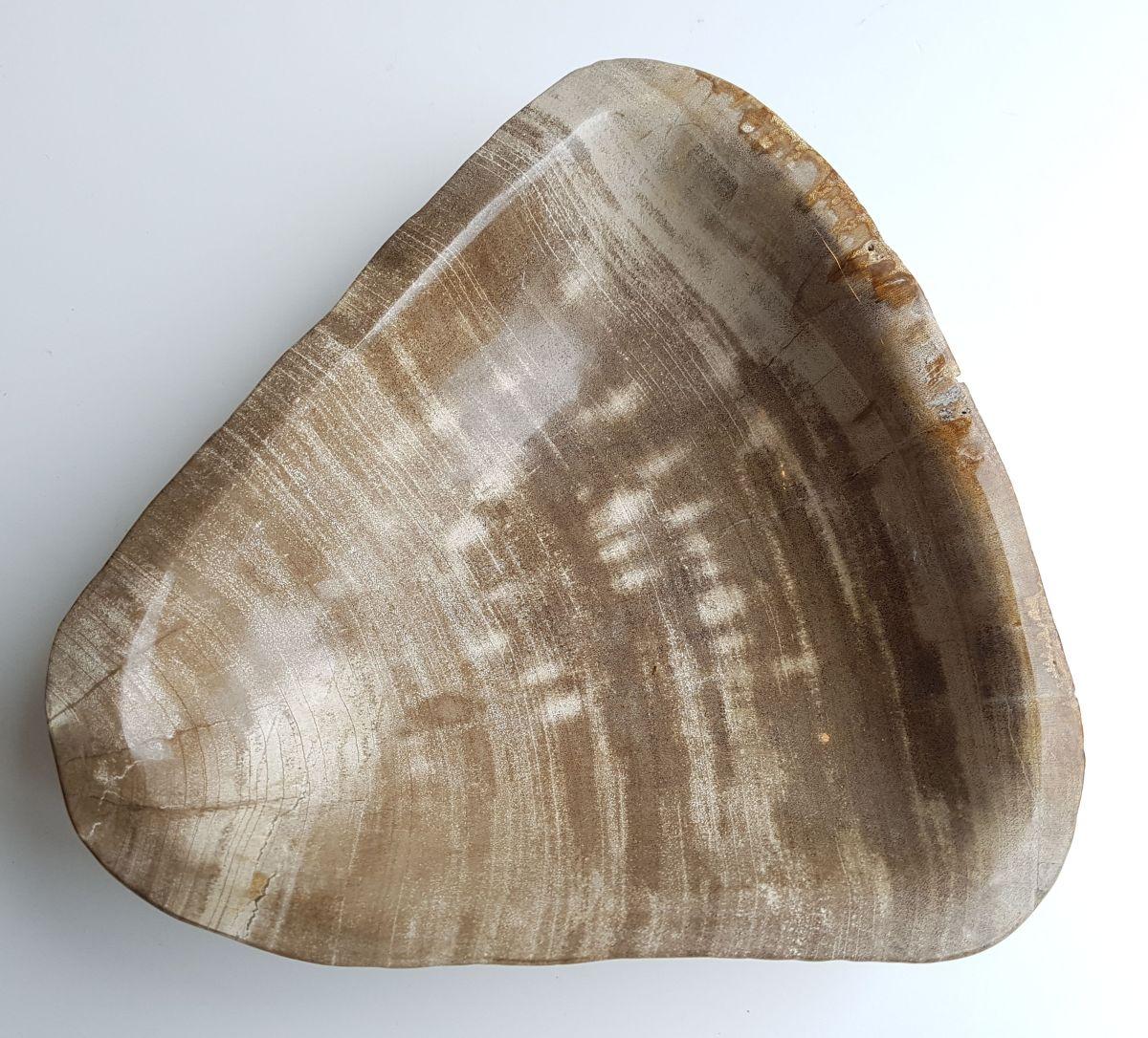 Schale versteinertes Holz 33043