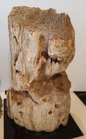 Pierre tombale bois pétrifié 27623