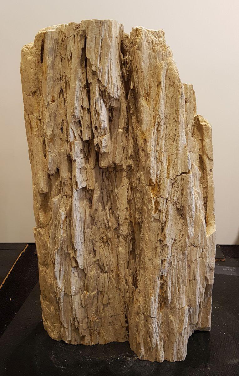 Pierre tombale bois pétrifié 33077
