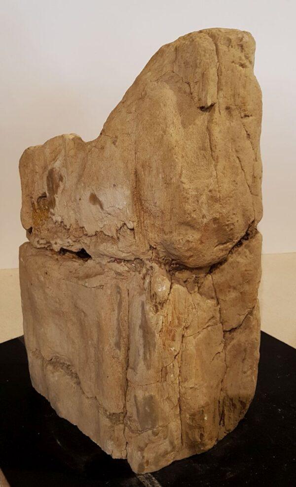 Pierre tombale bois pétrifié 33082