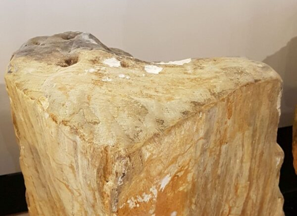 Pierre tombale bois pétrifié 33083