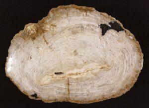 Coffee table petrified wood 32367