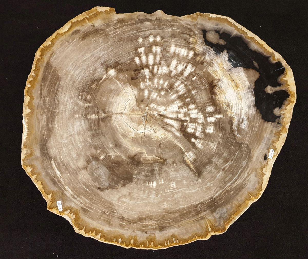Couchtisch versteinertes Holz 32257