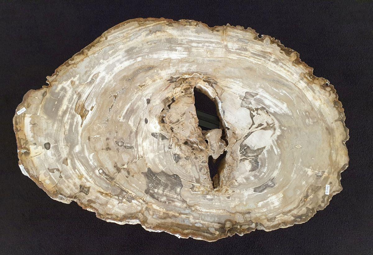Couchtisch versteinertes Holz 32362