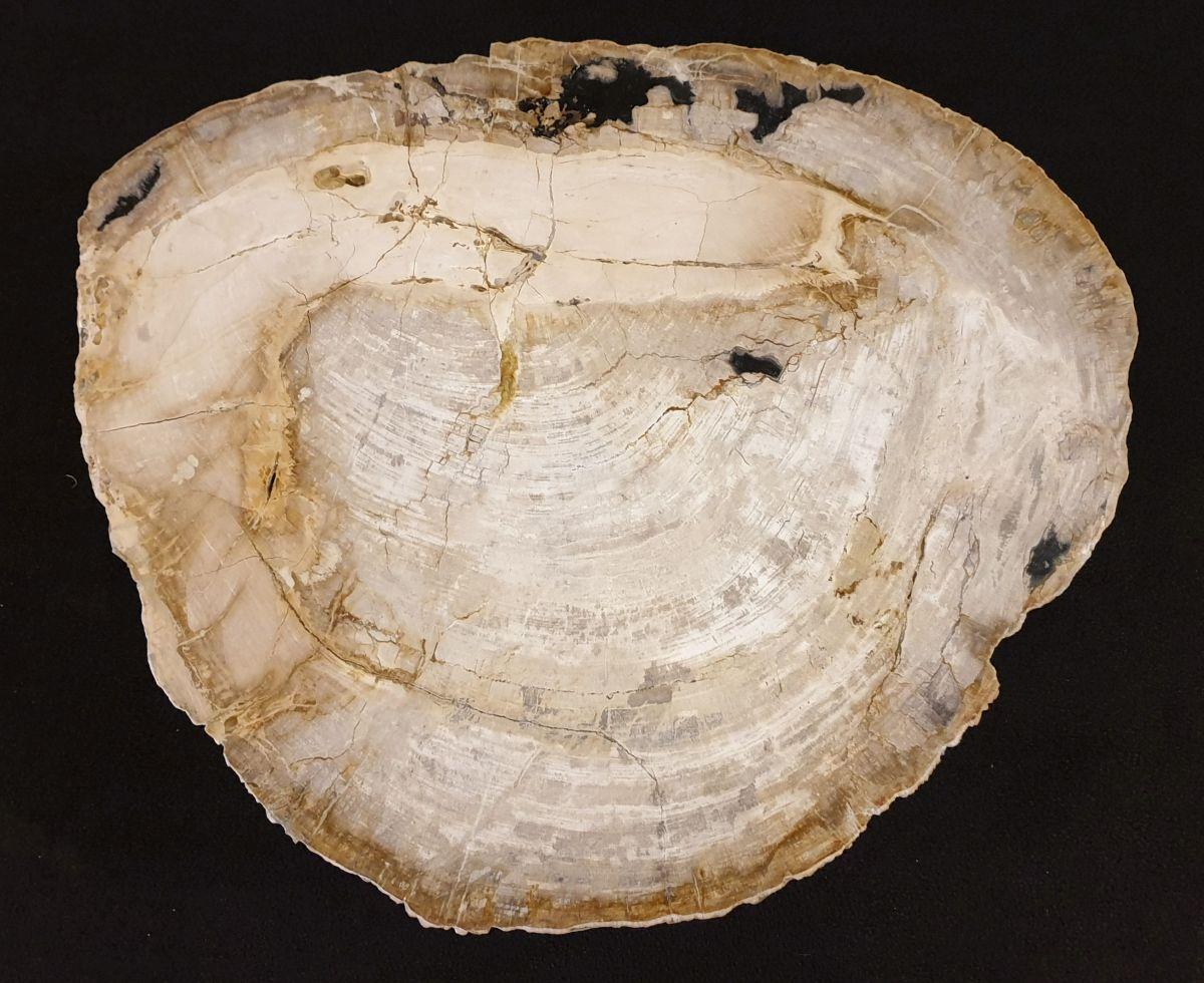 Couchtisch versteinertes Holz 32364