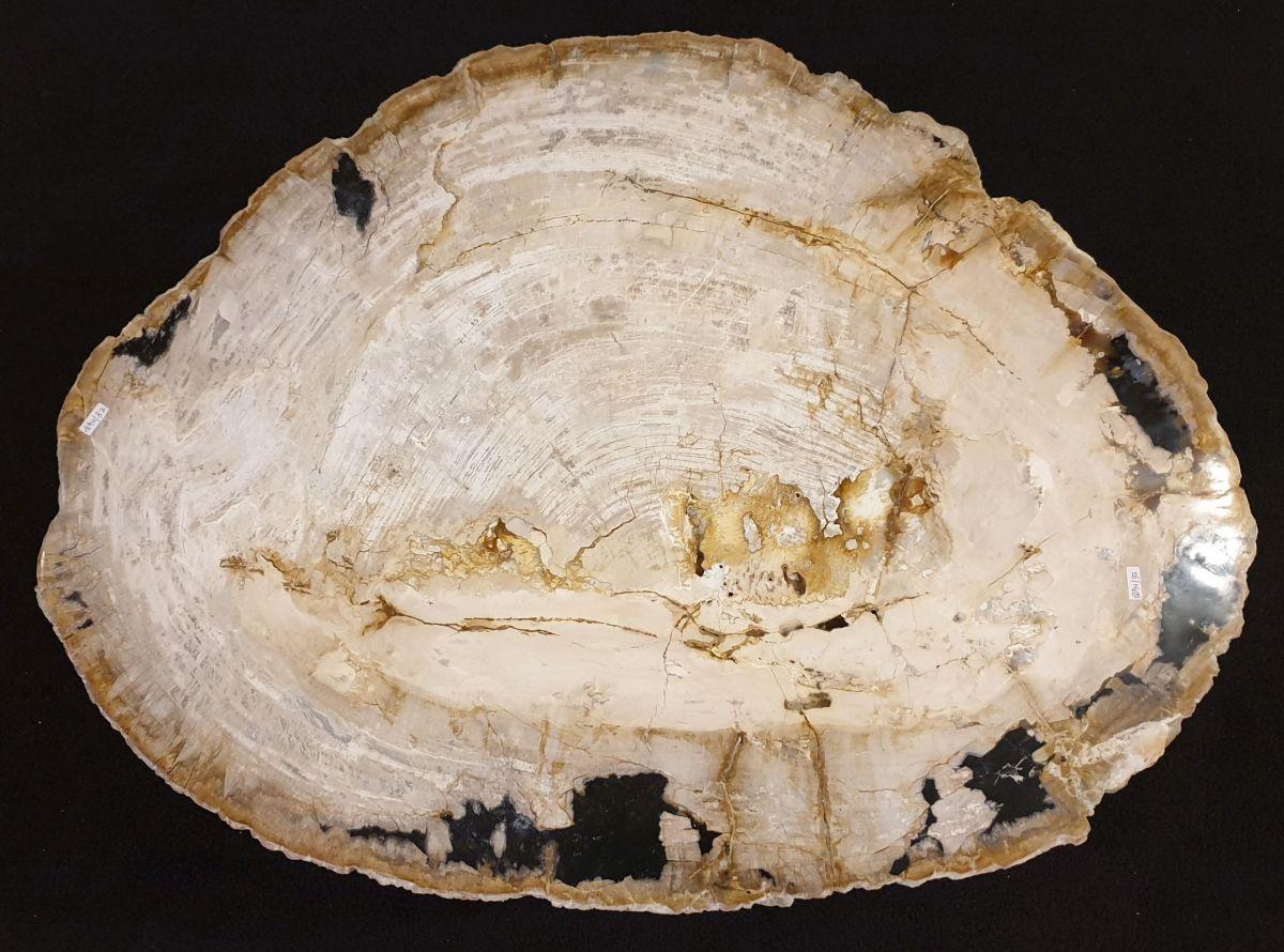 Couchtisch versteinertes Holz 32366