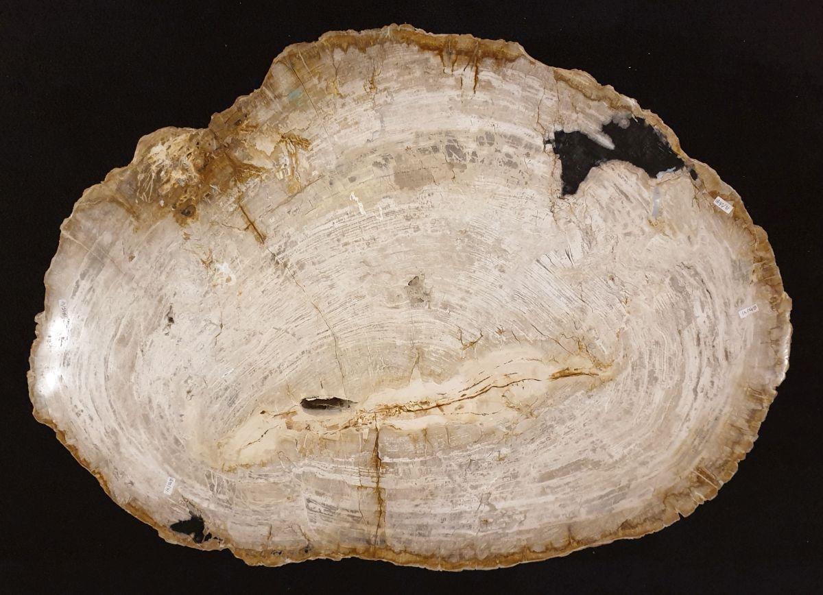 Couchtisch versteinertes Holz 32367